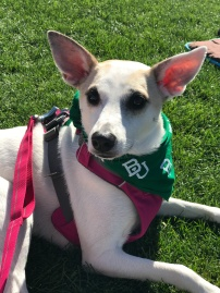 Baylor Baseball Bark in the Park